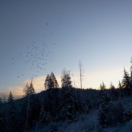 sunrise flock to feed