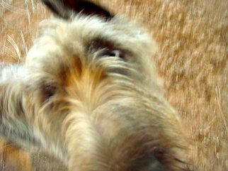 Color Photograph by Debbi Chan titled: surprise, 2010