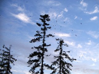 Color Photograph by Debbi Chan titled: the birds begin their day, 2010