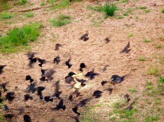 Color Photograph by Debbi Chan titled: the blackbirds, 2010