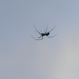 the itsey bitsey spider
