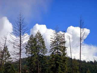 Color Photograph by Debbi Chan titled: three clouds for three trees, 2010