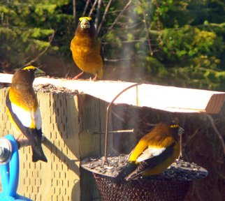 Color Photograph by Debbi Chan titled: three yellow birds, created in 2010