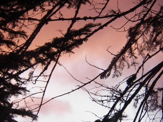 Artist: Debbi Chan - Title: tree abstracted in pink - Medium: Color Photograph - Year: 2012