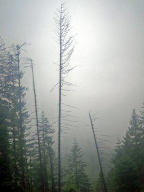 Color Photograph by Debbi Chan titled: tree and rainy fog, created in 2010