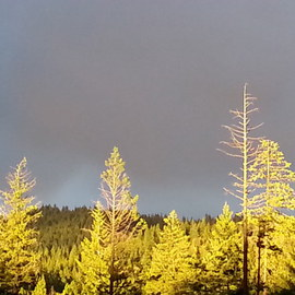 Debbi Chan: 'tree bright', 2013 Color Photograph, Landscape. Artist Description:        Photos from Idaho.                            photos from Idaho.          photos from Idaho.      ...