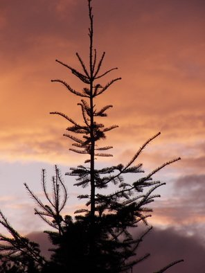 Artist: Debbi Chan - Title: tree top with color - Medium: Color Photograph - Year: 2012