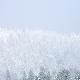 Debbi Chan: 'trees covered in white', 2011 Color Photograph, Landscape. Artist Description:        photos from idaho            ...