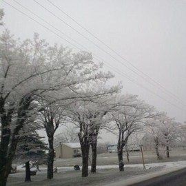 Debbi Chan Artwork trees covered with ice , 2011 Color Photograph, Landscape
