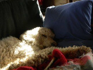 Debbi Chan: 'warmed by sunshine', 2011 Color Photograph, Dogs. Artist Description:               photos from idaho.             ...