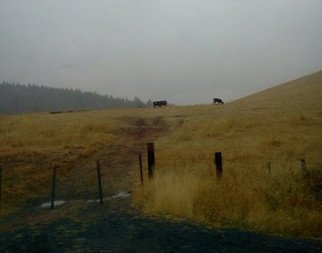 Artist: Debbi Chan - Title: wet bovine in golden field - Medium: Color Photograph - Year: 2011