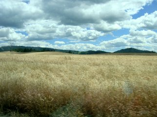 Color Photograph by Debbi Chan titled: wheat field , created in 2010