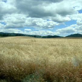 Debbi Chan: 'wheat field ', 2010 Color Photograph, Landscape. Artist Description:          photos from idaho.                                                                                    ...