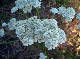 Color Photograph by Debbi Chan titled: white bouquet, 2010
