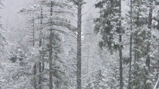 Debbi Chan: 'white trees', 2010 Color Photograph, Landscape. Artist Description:    photos from Idaho.   ...