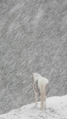 Debbi Chan Artwork willow braves the weather, 2010 Color Photograph, Equine