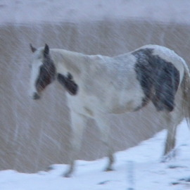 Debbi Chan Artwork willow in first snowfall  of  year, 2010 Color Photograph, Equine