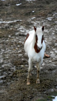 Debbi Chan Artwork willow in mud, 2010 Color Photograph, Equine