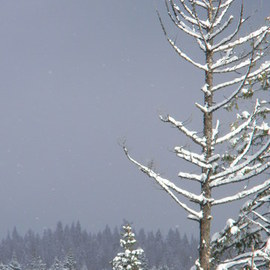 Debbi Chan: 'winter is stark', 2010 Color Photograph, Landscape. Artist Description:           photos from Idaho.          ...