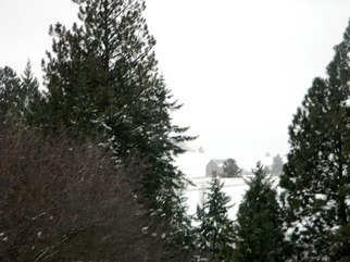 Artist: Debbi Chan - Title: winter peeks through the trees - Medium: Color Photograph - Year: 2011