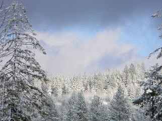 Debbi Chan: 'winter photo', 2012 Color Photograph, Trees. Artist Description:    photos fromj idaho.  ...