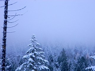 Artist: Debbi Chan - Title: winter wonder - Medium: Color Photograph - Year: 2010