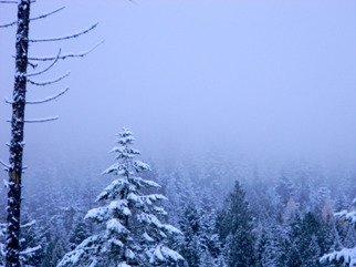 Artist: Debbi Chan - Title: winter wonder - Medium: Color Photograph - Year: 2010