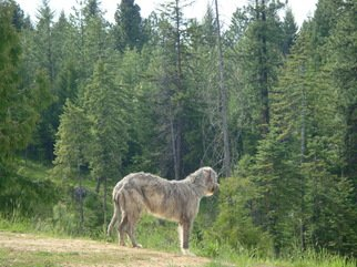 Color Photograph by Debbi Chan titled: wolfhound stands guard, created in 2010
