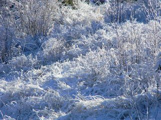 Artist: Debbi Chan - Title: wonderland of white snow - Medium: Color Photograph - Year: 2012