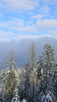 Debbi Chan: 'xmas trees in living color', 2010 Color Photograph, Beauty. Artist Description:        photos from idaho.     ...
