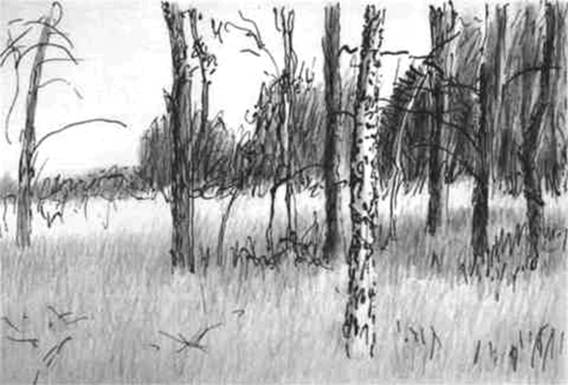 Keith thrash trees by a field 2001 pencil drawing landscape