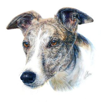 Pencil Drawing by Anna Shipstone titled: Pet Portrait, created in 2013