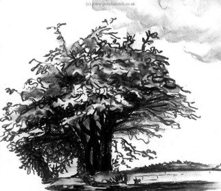 Nature Charcoal Drawing by Anna Shipstone Title: Tree, created in 1999