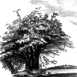 Anna Shipstone Artwork Tree, 1999 Charcoal Drawing, Nature
