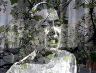 Stephen Mead: 'Billie Reflecting Excerpt', 2009 Mixed Media, Movies. PRINT ONLY.  Billie ReflectingExcerpt is a photomerge film still from a film which can be seen in on YouTube.  It is part of a series of collage- films begun in 2007.  The work is available as a print. ...