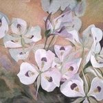 A Profusion Of Sego Lilies, Sue Jacobsen