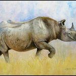 Goodbye White Rhino By Suzanne Painter