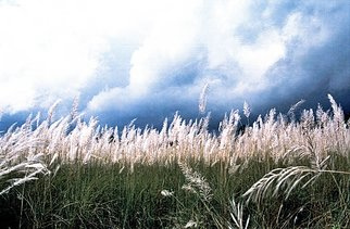 Artist: Sumant Barooah - Title: Grasslands - Medium: Color Photograph - Year: 2008