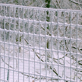 Fenced In Ice, Donna Lamothe