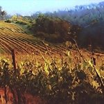 vineyards at sunset By Tatum Parks