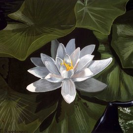 Tatyana Bondareva: 'White Water Lily', 2010 Other Painting, Floral. Artist Description:   Lilies, water lily, gouache  ...