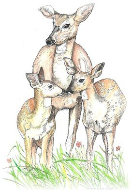 Terri Flowers Artwork Keep It Together, 2008 Pen Drawing, Animals