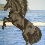 Black Stallion By Teresa Peterson