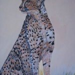 Cheetah By Teresa Peterson