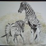 Fighting Zebras By Teresa Peterson