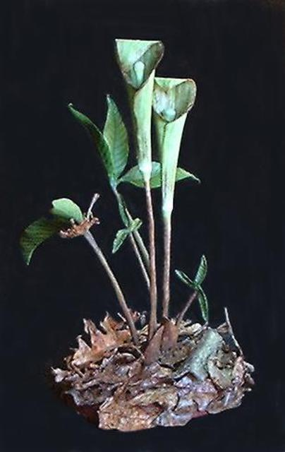 Teresa Turner  'Jack In The Pulpits', created in 2005, Original Sculpture Other.