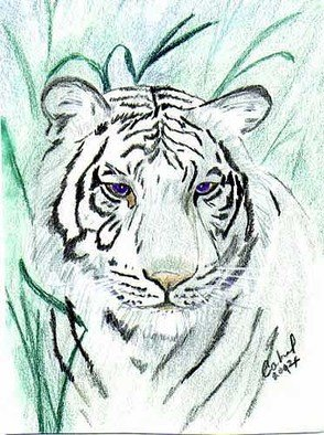 Terri Cabral: 'royal white bengal tiger', 2014 Other Drawing, Animals. Portrait of royal white Bengal tiger in watercolor pencil and ink...