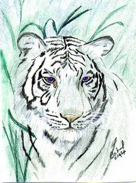 Terri Cabral  'Royal White Bengal Tiger', created in 2014, Original Drawing Other.