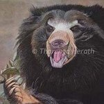 Sloth Bear In Yala, Tharanga Herath