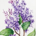 Lilac By Tatiana Azarchik